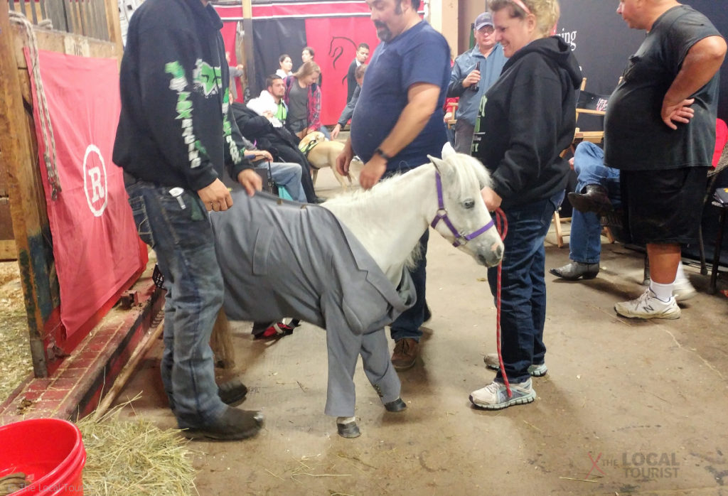 Pony in a suit at the Minnesota State Fair