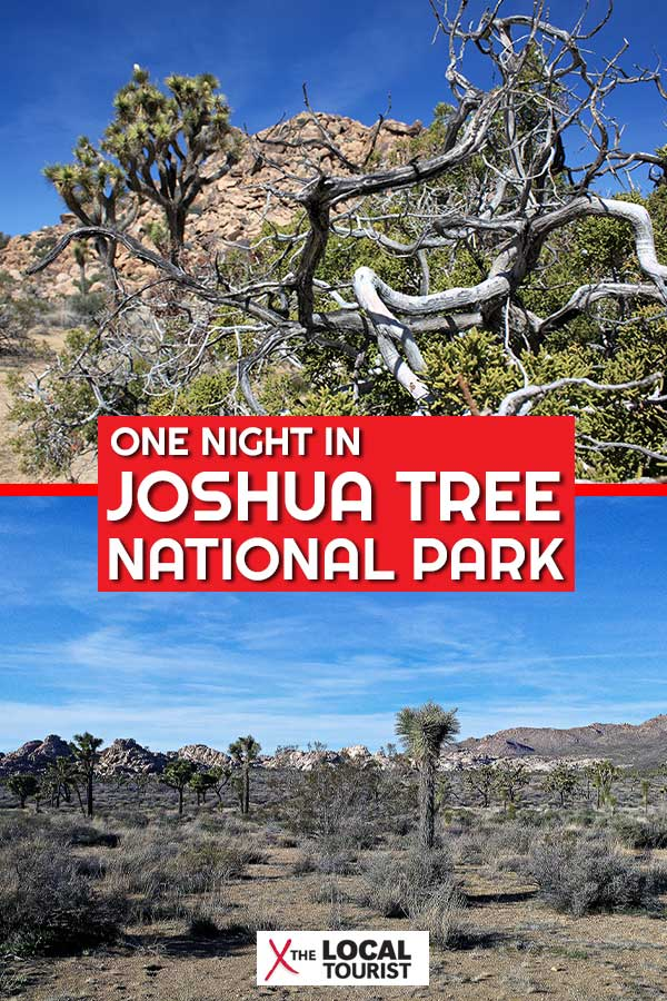 """Find out what it's like to spend a night in Joshua Tree National Park in this excerpt from """"Two Lane Gems, Vol. 1: Turkeys are Jerks and Other Observations from an American Road Trip."""""""