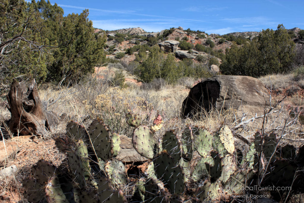 Cacti in Palo Duro Canyon State Park