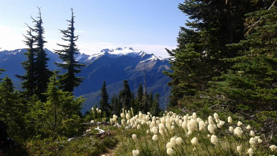 Olympic National Park, photo by LeAnna Brown, Well Traveled Nebraskan