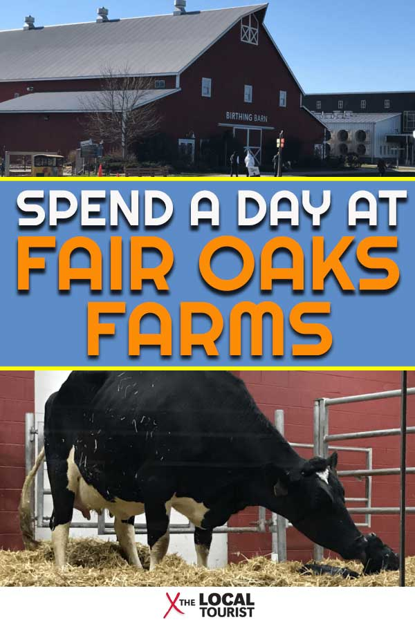 See what it's like to spend a day at Fair Oaks Farms, an agritourism destination in Indiana. Located off I-65, it's easy to find this fun and educational place.   Visit Indiana   Things to do in Indiana   Midwest Travel