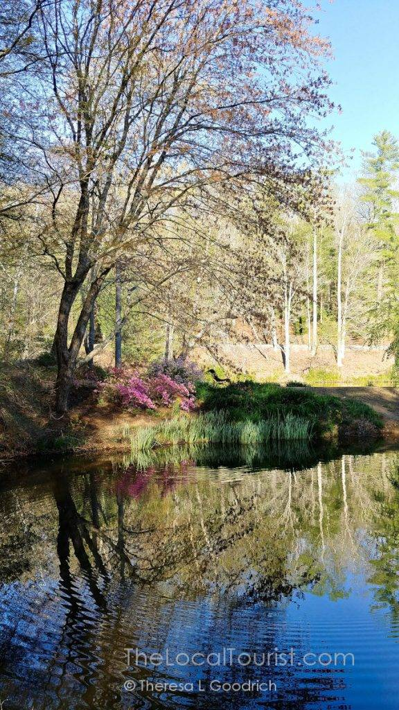 Reflections in the pond at Biltmore
