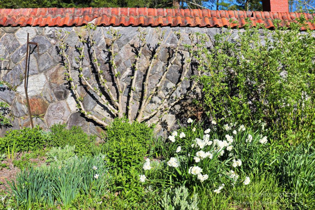 Walled garden at Biltmore