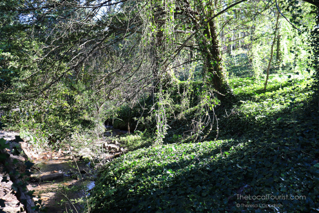 Lush green path at Biltmore