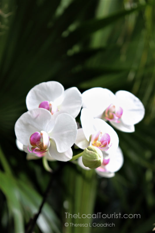 The Biltmore has gorgeous orchids