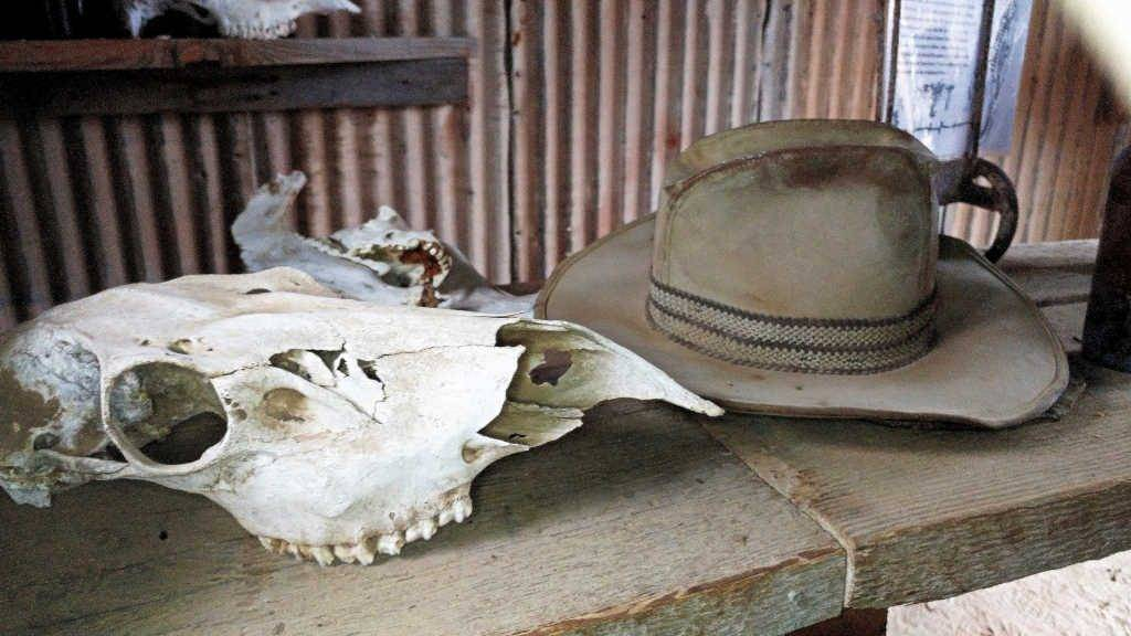 Cattle skull and hat at Castle Dome Mine Museum