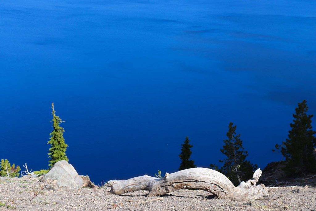 A dead tree overlooks Crater Lake