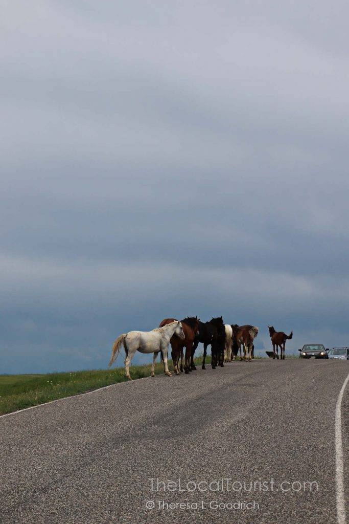 Traffic jam, Montana-style
