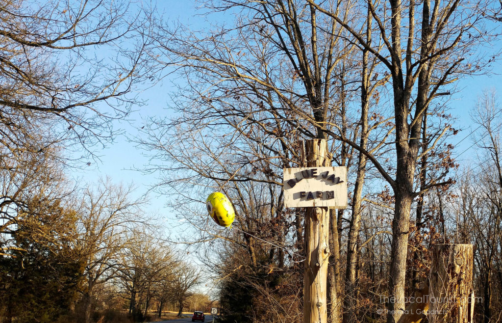 Sponge Bob balloon marks the turn for Blue Jay Farm