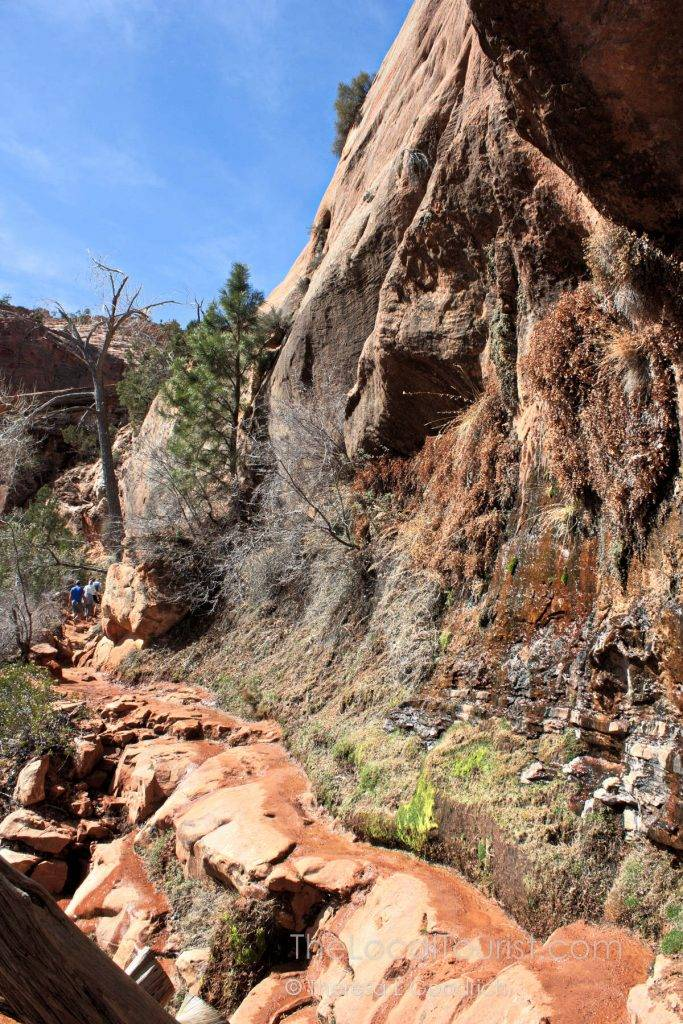 Narrow trail on the side of the mountain in Zion National Park