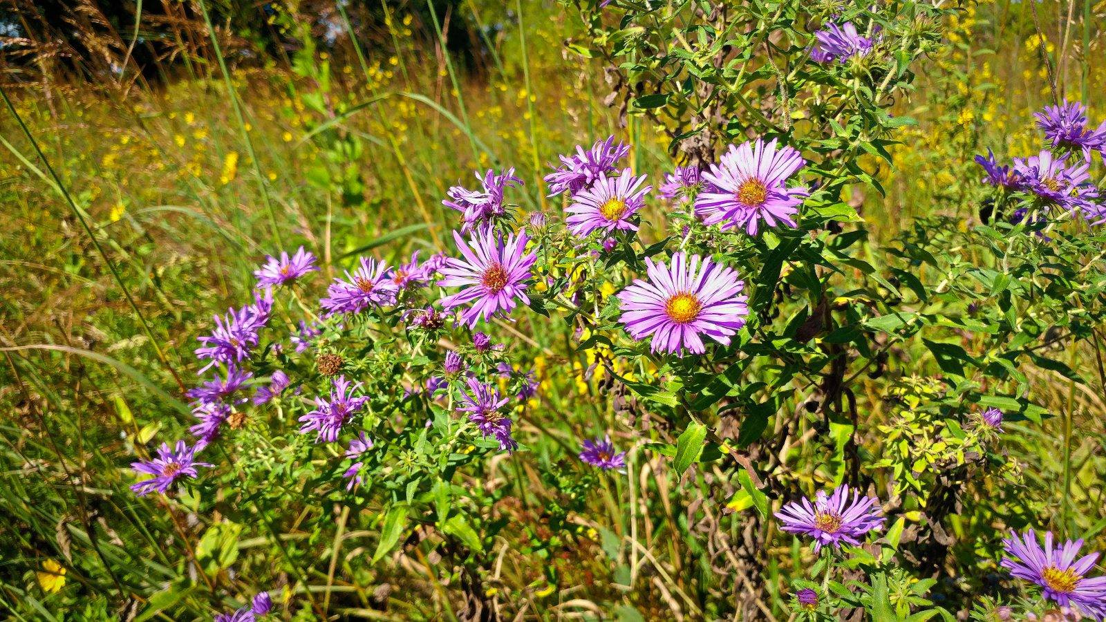 Wildflowers at Casper Bluff Land & Water Reserve