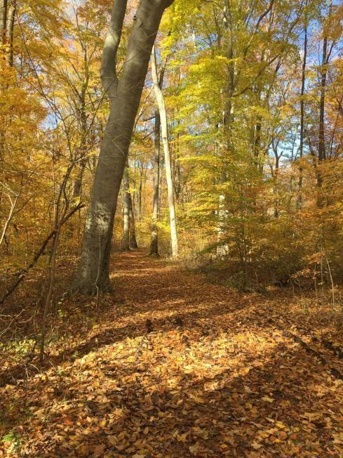 Leaf-covered trail in Turkey Run State Park
