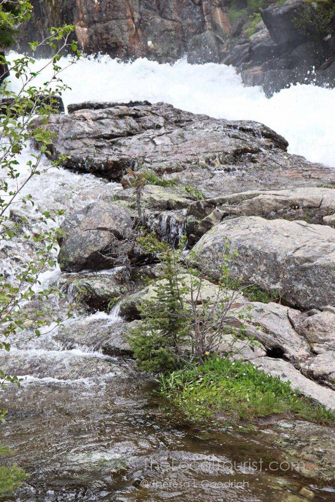 Lake Creek rushing under Beartooth Highway