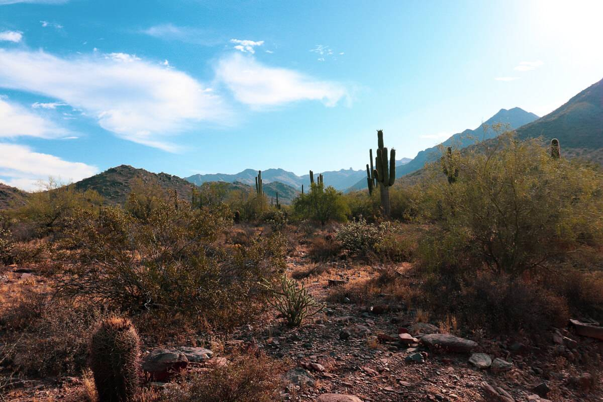 Desert scene at McDowell Sonoran Preserve in Scottsdale, Arizona