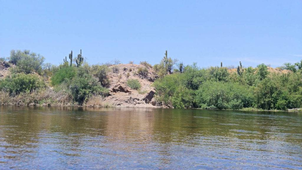 Saguaro cacti at the top of a crest leading into the Salt River