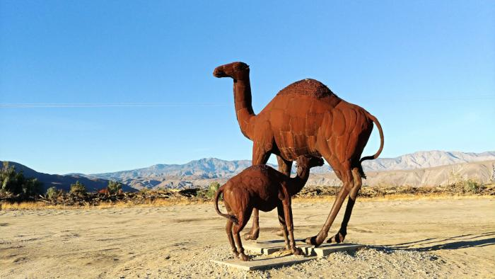 Borrego Springs Camel Sculpture by Ricardo Breceda