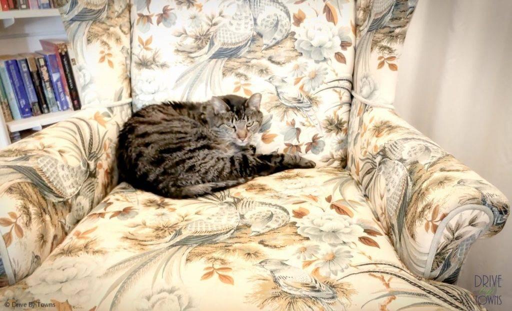 Graycat at Bottger Mansion