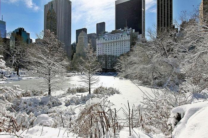 New York, NY Christmas - Talek Nantes