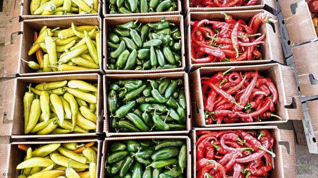 Colorful peppers at the Cedar Valley Produce Auction