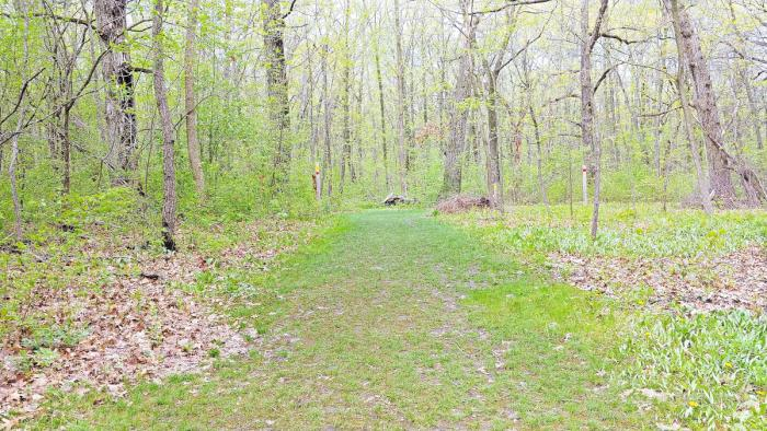 Bristol Woods in Kenosha Wisconsin