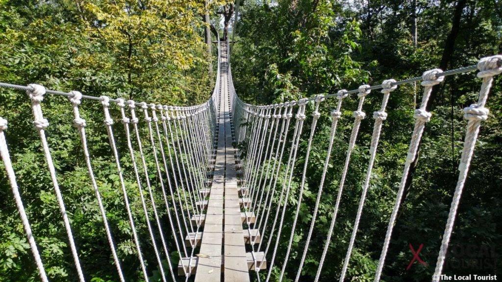 Long Hollow Canopy Tours Suspension Bridge