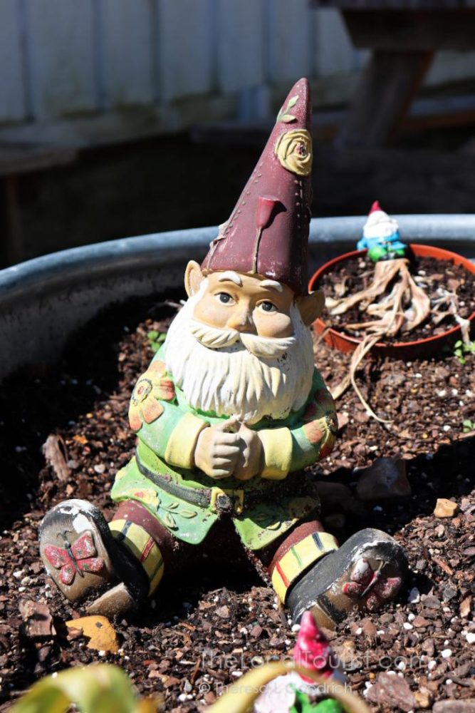 Gnome garden at M7 Coffee Shop