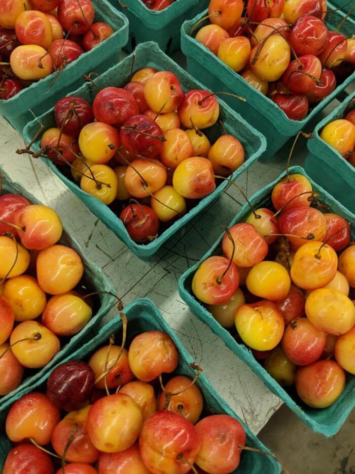 Cherries from the Garden Center in Sawyer, Michigan; photo credit Blagica