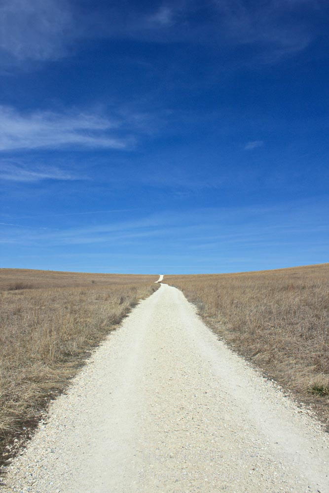 Path through Tallgrass Prairie National Preserve