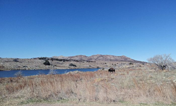 Bison in the distance at Wichita Mountains Wildlife Refuge