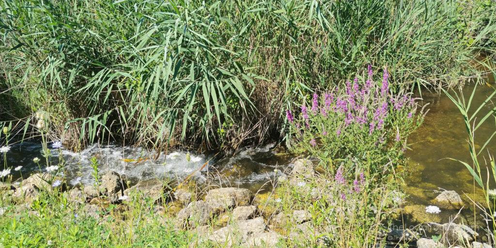 Bubbling creek along the Prairie Trail