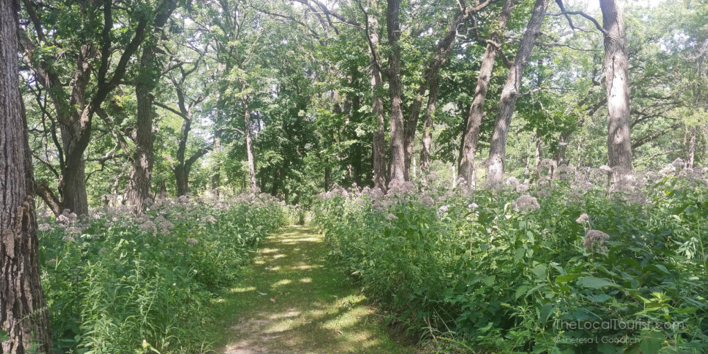 Pleasant Valley Conservation Area in McHenry County