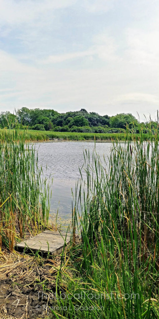 Dufields Pond, a popular fishing spot in McHenry County