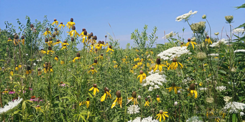 Wildflowers at one of McHenry County's conservation areas