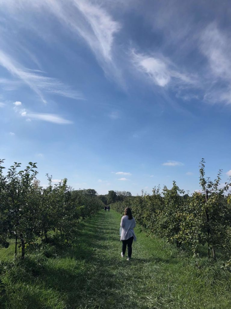 County Line Orchard, photo by Elizabeth Pollack