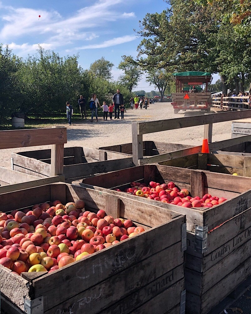 Apples at County Line Orchard