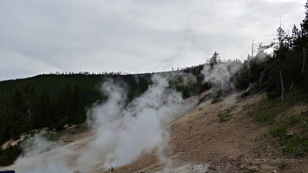 Steam from the earth's core along the roadside in Yellowstone