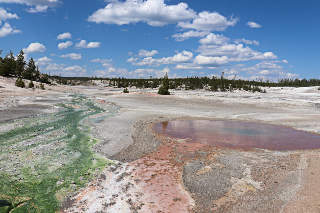 thermophiles and extremophiles in Yellowstone National Park