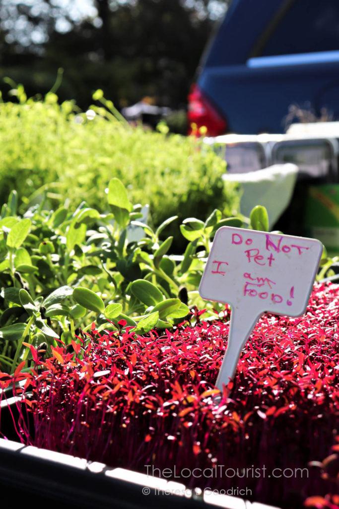 Microgreens at Woodstock Farmers Market